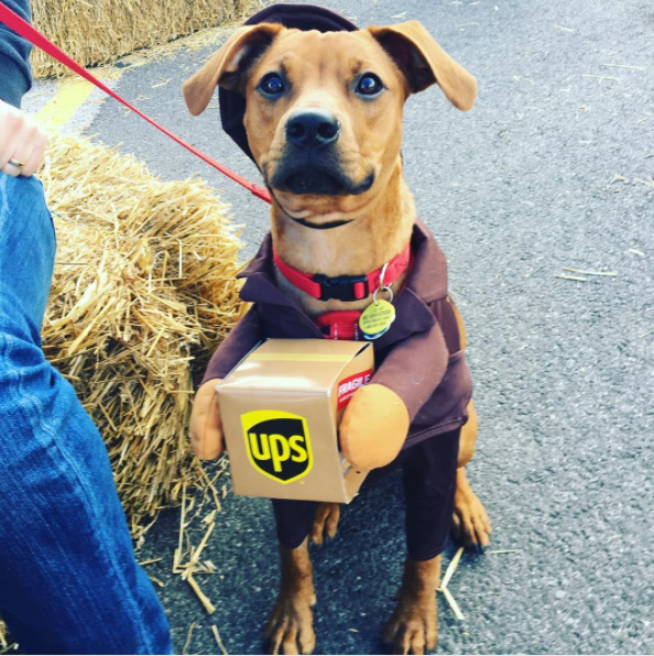 IMAGE: IG user @herbert.the.hound / POST:{ }I'm ready for my treats now! Happy Howl-ween.