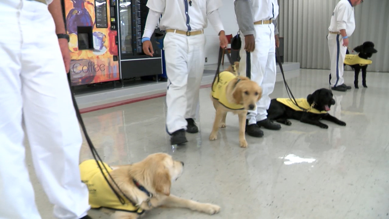 georgia inmates get job training while helping the blind wxlv rh abc45 com Golden Retrievers as Guide Dogs Puppy Dog Training