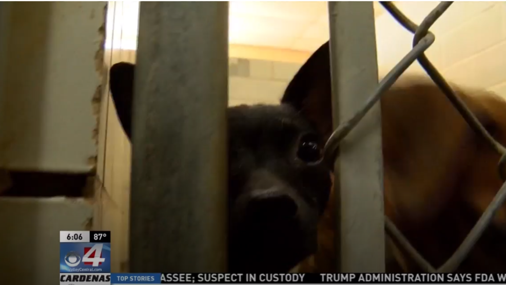 Cameron County requests donations for dogs rescued from