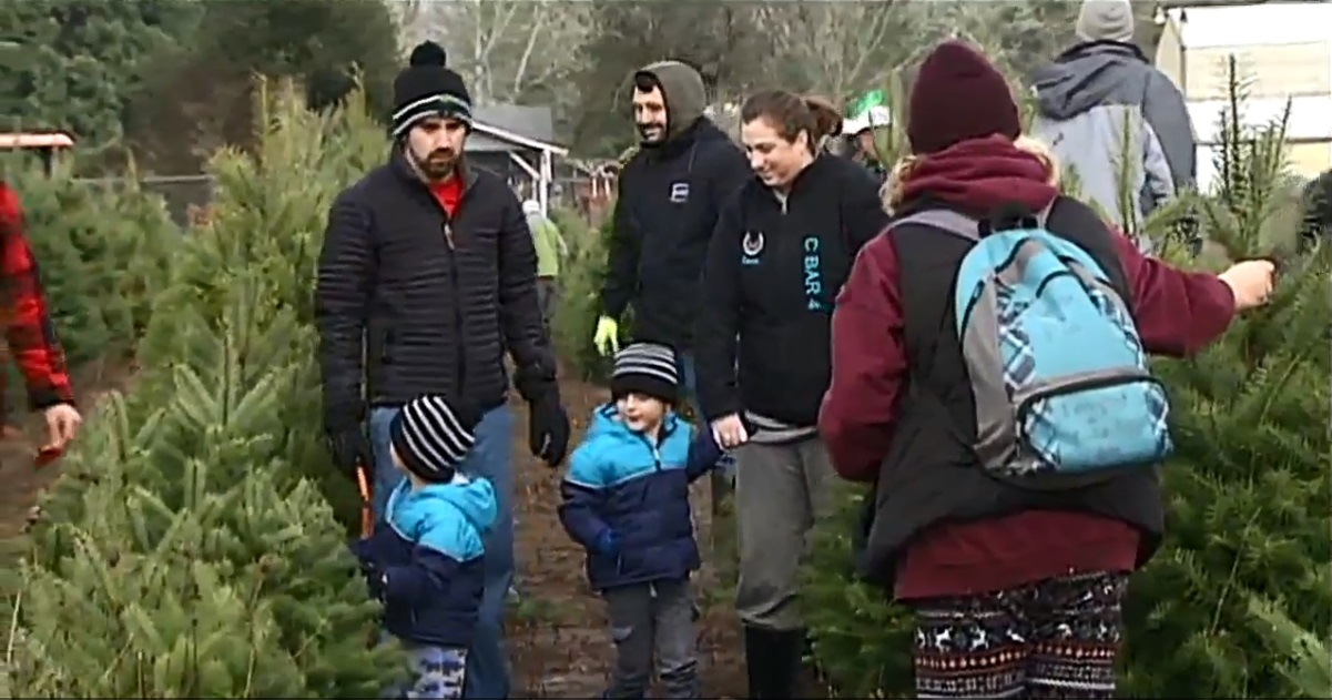 Eugene Active 2030 Club teams up with Pearl Buck preschoolers to select and cut down Christmas trees to take home for the holiday, Dec. 6, 2017. (SBG)