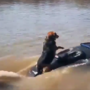 Doggone fun: Kneeboarding pup shows off skills on the Gasconade River