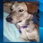Update: USFS employee finds missing dog after fatal crash