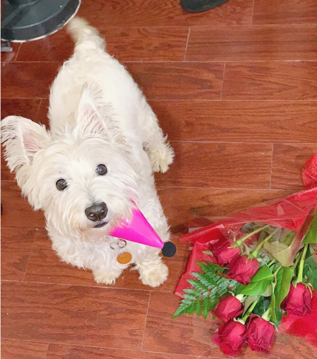 Roses are red, violets are blue,{ } we love this dog and you should too! (Image via @gibbs_the_westie)
