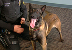 P-GREEN TWP K9.transfer_frame_7536.png