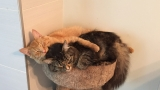 PHOTOS | Inseparable kitties outgrow their bed together but still insist on sharing