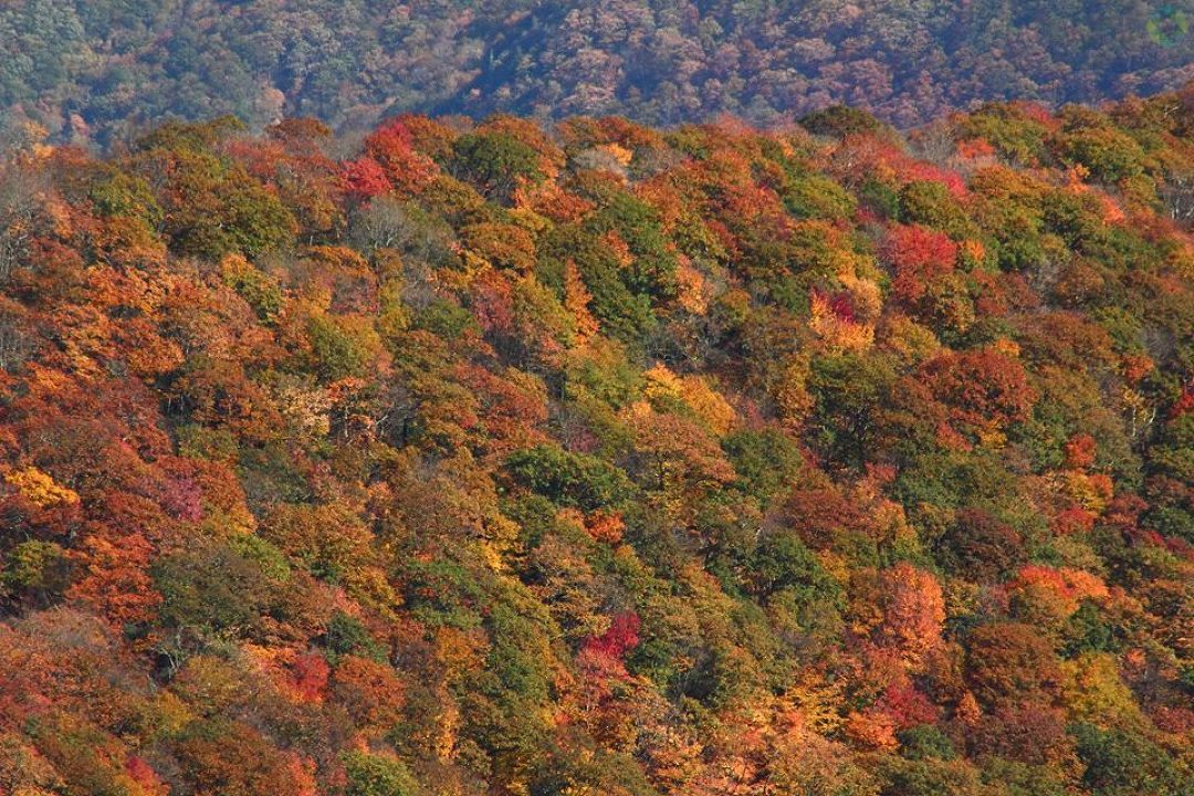 Fairview in fall. Photo: Bob Lentini