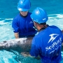 SeaWorld Orlando treating whale that beached herself