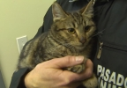 PKG- CAT RESCUE.transfer_frame_4664.jpg