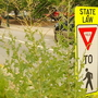 Asheville to open bids for overgrown median cleanup