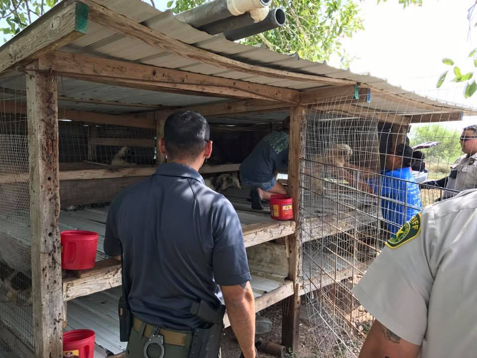 The dogs were kept in a doubled stacked chicken coop wrapped with chicken wire with an aluminum floor and roof. (Photo courtesy Jim Wells County Sheriff's Office)