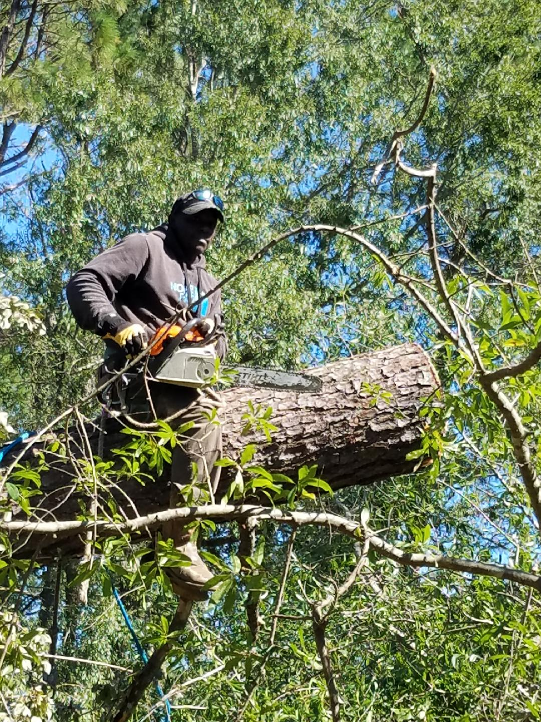 Dewey Small cutting down tree branches. Small died when he fell out of a tree in Socastee Thursday. (Photo provided by Jason Drake)
