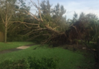 Lake Worth_Parkvista HS_Uprooted trees_Kayla Thomas.PNG