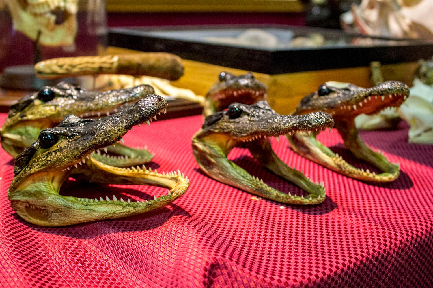 Thousands waited in line Saturday, Jan. 13, 2018 to enter the Portland Metro Reptile Expo at the Portland Holiday Inn. Vendors from across the Pacific Northwest traveled to Portland to showcase not just reptiles, but insects, arachnids and amphibians as well. Visitors could hold the animals and ask the breeders and vendors questions before making purchases. Photo by Amanda Butt