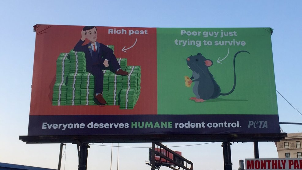 New PETA billboard in Baltimore targets Jared Kushner
