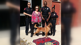 After public protest, K-9 to return to former handler