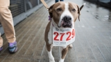 Photos: 30th annual Oregon Humane Society Doggie Dash