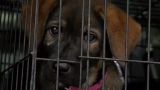 Grand Strand Humane Society sends 70 furry friends to new families up north