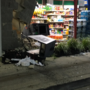 Suspects slam truck into convenience store, smash ATM in attempted robbery in PG County