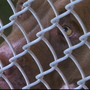 Community responds to WilCo animal shelter plea for adoptions, fosters