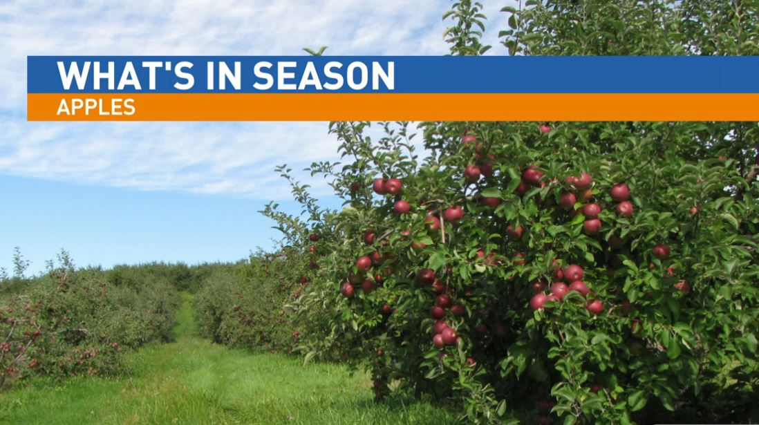 Ryan Jacobsen with the Fresno County Farm Bureau visited Great Day to talk about What's In Season: Apples.