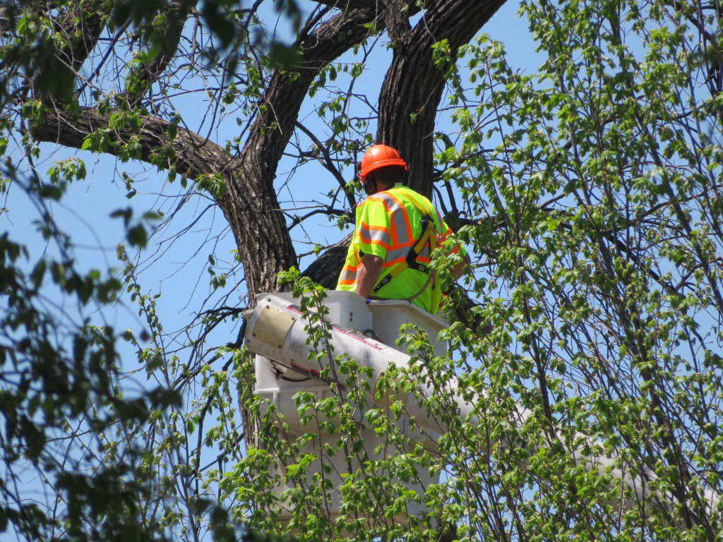 At the U.S. Capitol workers are taking down a tree that partially collapsed killing a grounds worker, Tuesday, April 18, 2017 (Sam Ford/ABC7)