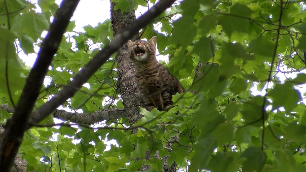 Cat Stuck In Tree For Nearly A Week Wpbn