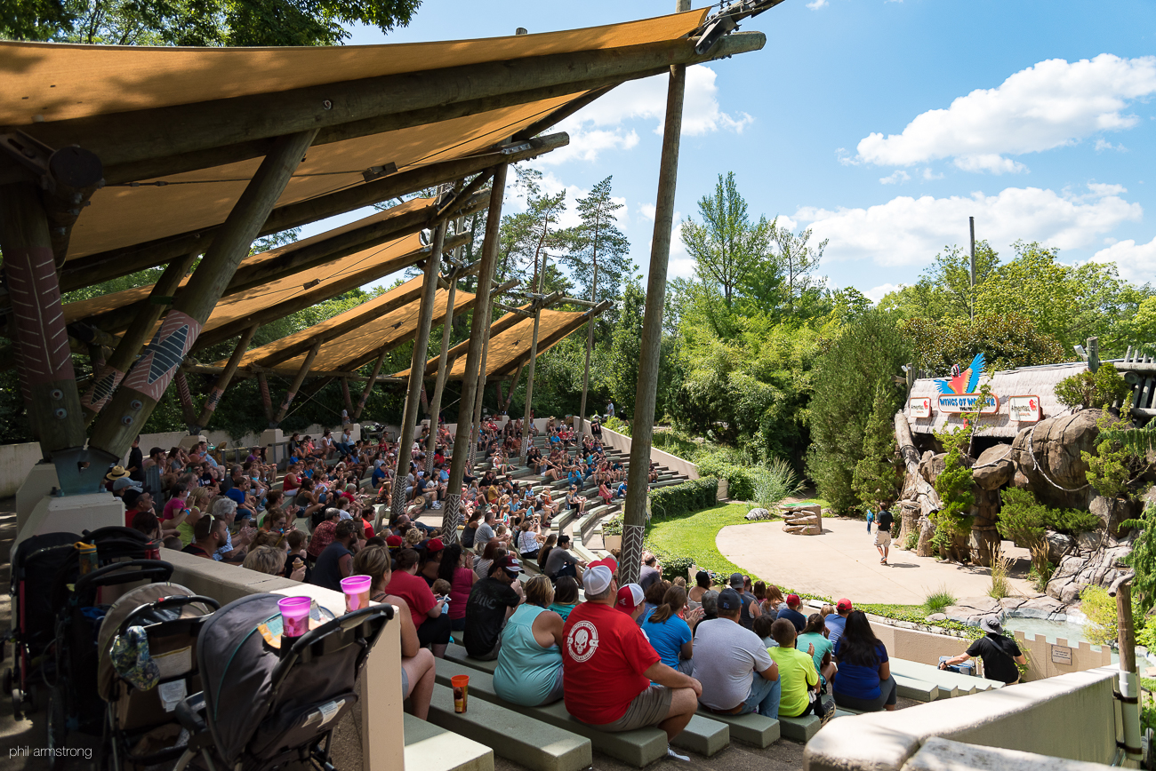 The Wings of Wonder Bird Show is a scripted, half-hour long presentation that showcases exotic birds flying and moving around a stage while zoo personnel who educate the crowd as the birds perform. / Image: Phil Armstrong, Cincinnati Refined // Published: 8.25.17