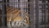 Tiger trainer injured at Pensacola fair, show canceled
