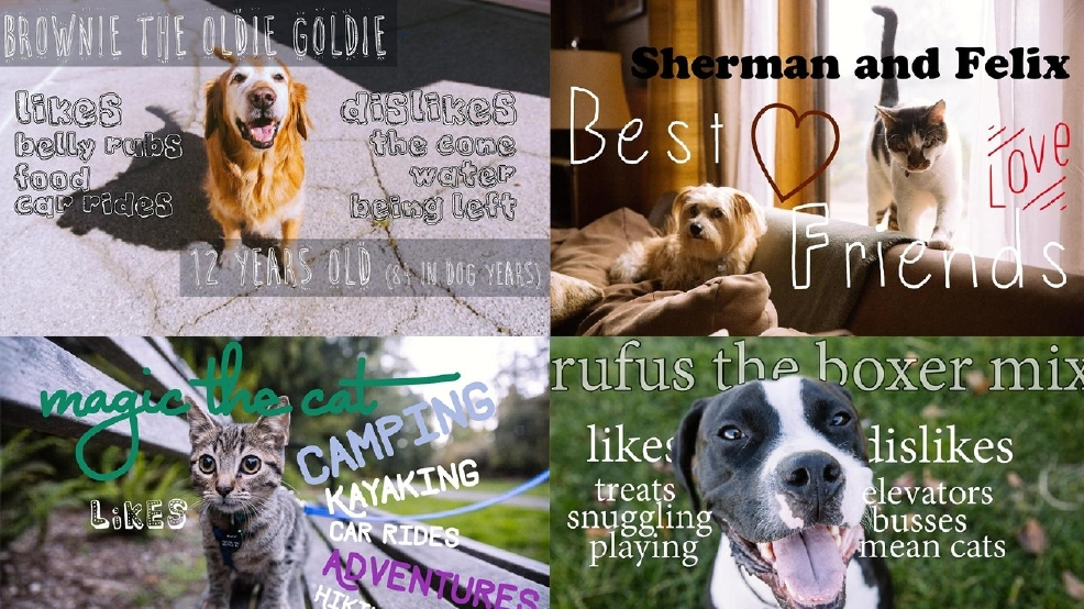 see our pets seattle humane autos post