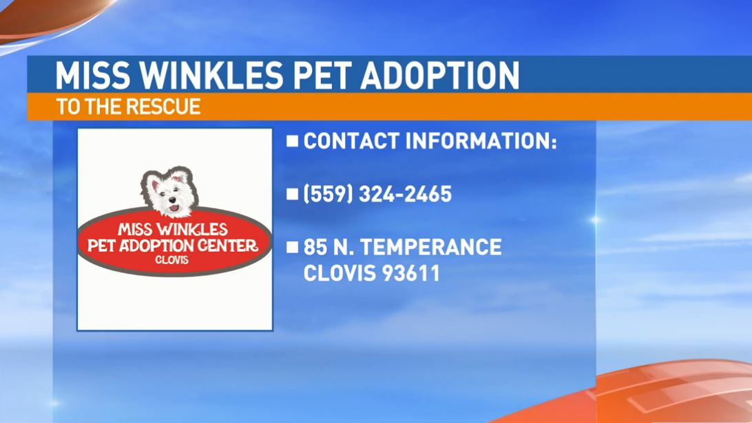 Miss Winkles Pet Adoption Center is located at 85 N. Temperance Ave. in Clovis.