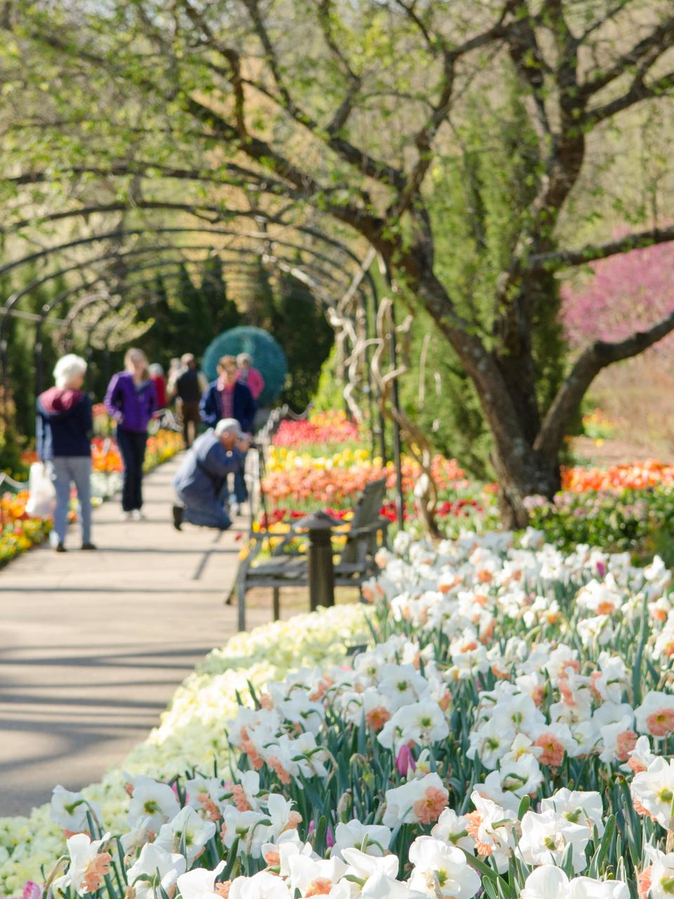 Cheekwood Offering 1 2 Price Admission To Celebrate National