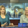 Haven Humane shares new information on show dogs rescued after theft in Redding