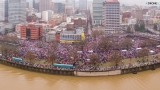 Organizers: 100K people attended Women's March in downtown Portland