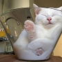 Photos: You'll be bowled over for this kitty