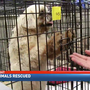 Homeless animals transported from Texas to middle Tennessee