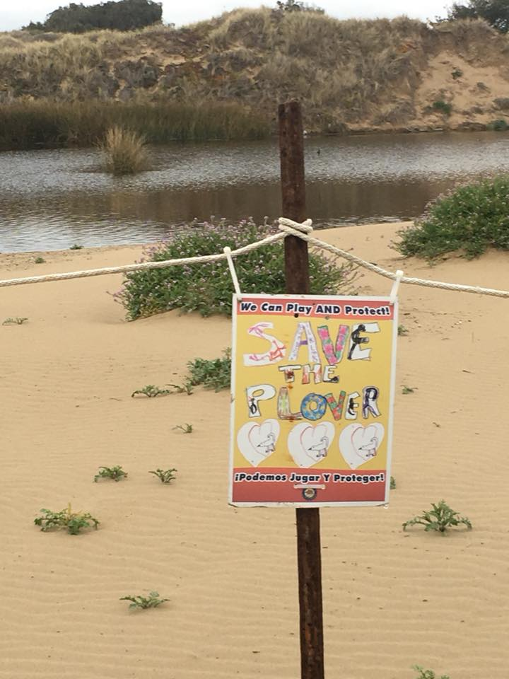 "Signs around the Oceano Dunes warning of the presence of the threatened Snowy Plover. The bird lives near the dunes and has been listed as ""threatened"" on the Endangered Species list. (Courtesy Pismo Dune Riders)"