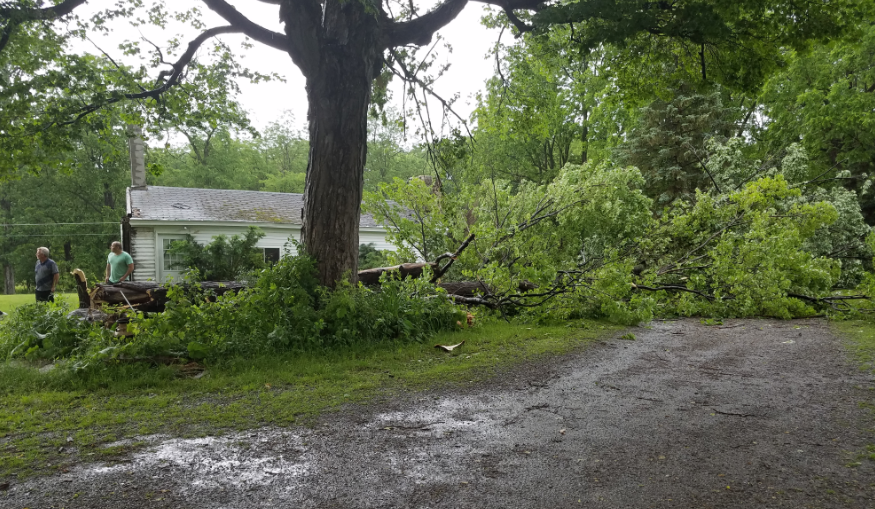 A tree hit by lightning in Conesus, NY (Photo: Chris Maggiulli)