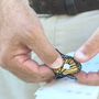 Fewer monarch butterflies passing through Nebraska