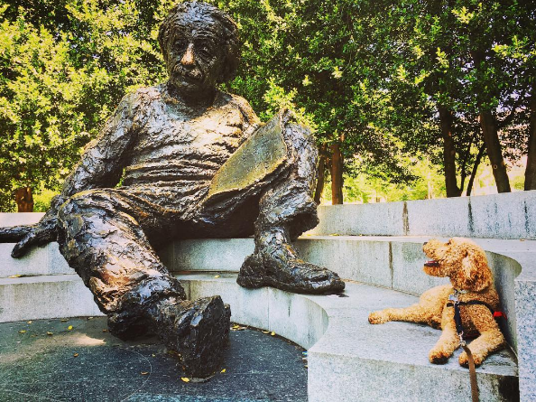 "IMAGE: IG user @copperpoodle / POST: ""So E is equal to MC squared, you say? Very interesting indeed..."" #photoswithalbert"