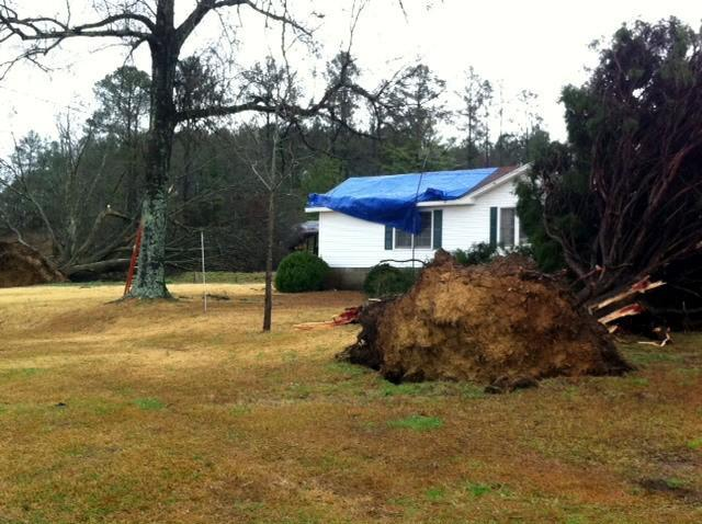 High winds caused this large tree to fall over off County Road 21 in Fayette County.