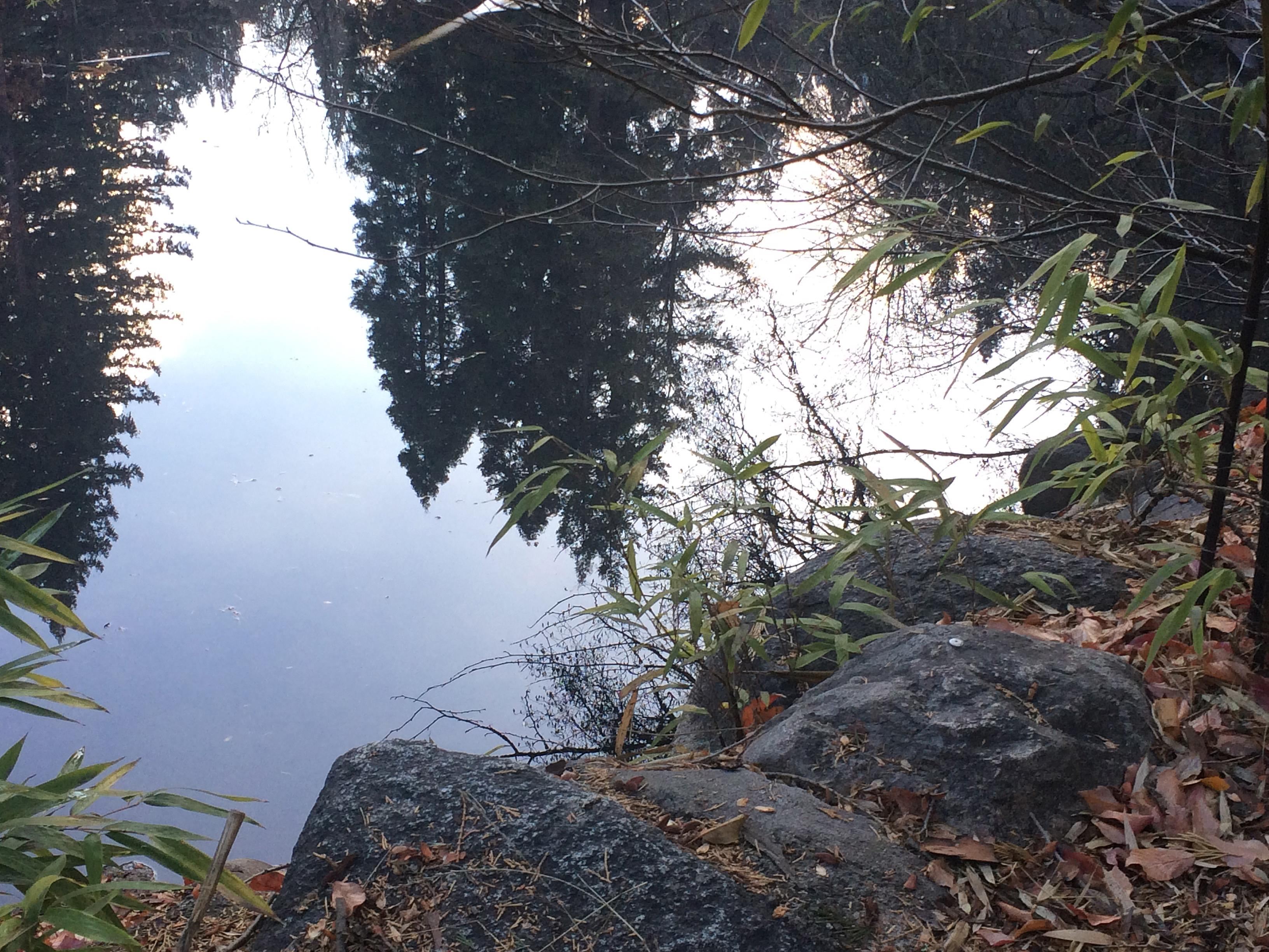 Frank Zderic took this photo of a reflection on Lithia Pond.