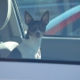 Should you break a car window if dog left inside? 'We cannot advise somebody to do that'