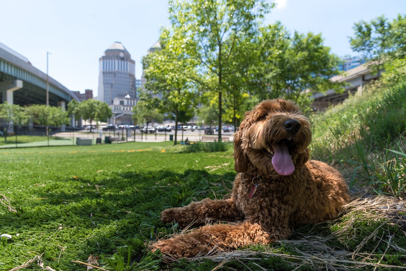 Tall trees planted during Fido Field's beginning are now tall enough to provide adequate shade for people and pooches alike. / Image: Phil Armstrong, Cincinnati Refined // Published: 5.29.18