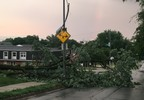 A FOX 42 News viewer sent us this photo of some trees that collapsed in the storm.