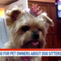 Officials:  Yorkie's death raises concerns about dog-sitters