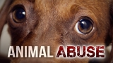 Animal abuse investigation in Tuscola County