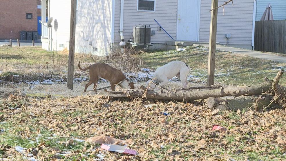 With freezing temperatures and a new anti-tethering law in effect, Columbus Humane Society agents are seeing a big increase in calls (WSYX/WTTE)
