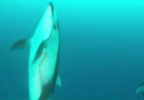 ODFW dolphin3.PNG