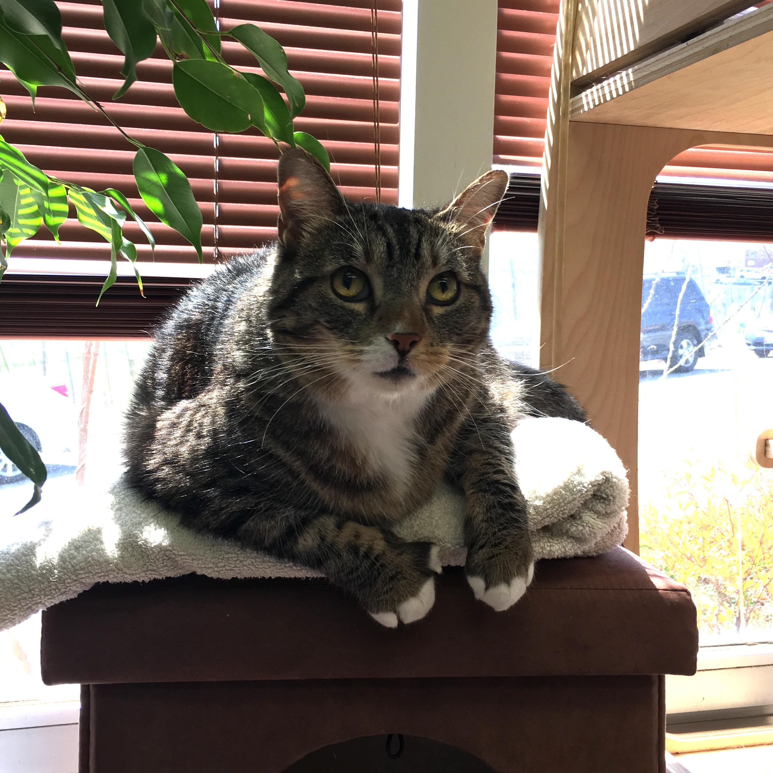 Sally wants nothing more than to sit on your lap and hear about your day -- she'll even tell you all about hers! (Image: Courtesy HRA)
