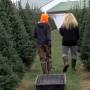 Choosing a Christmas tree is a special tradition for many